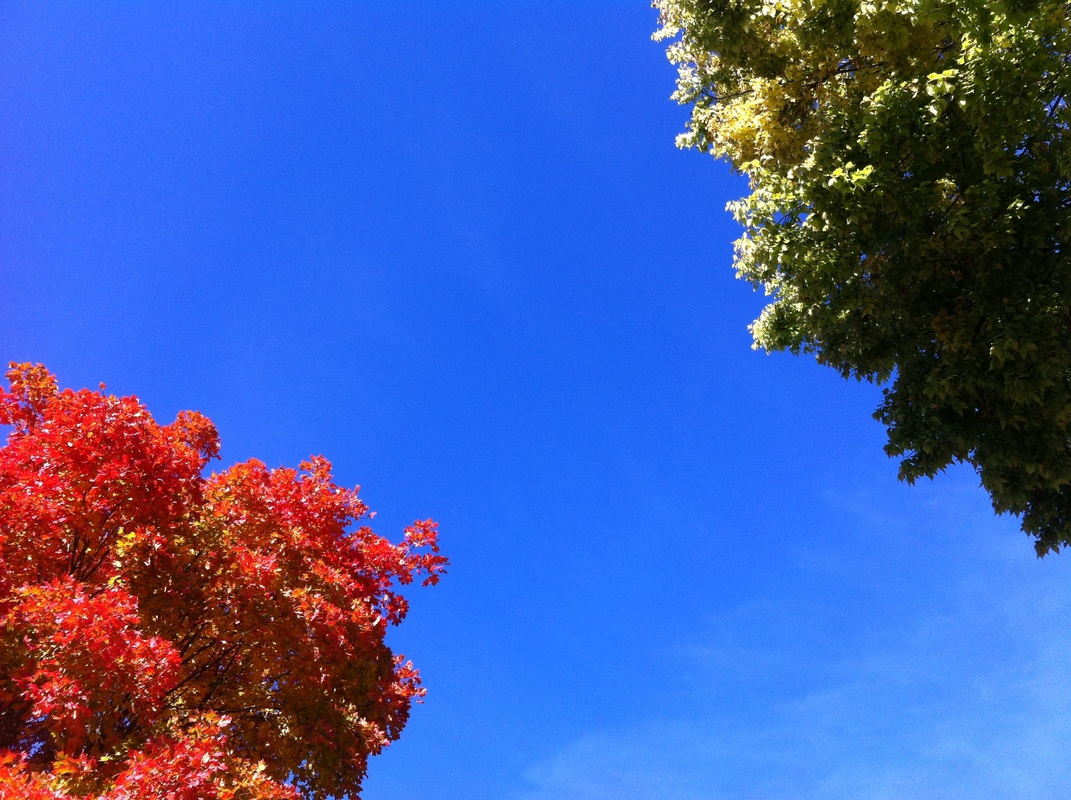 TURN ON IMAGES to see changing leaves against a blue sky.